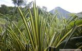 Holiday Home Costa Rica: 3 Bedroom House Over Looking Lake Arenal