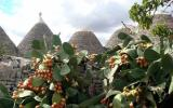 Holiday Home Puglia Fernseher: In Trulli Country, A Beautiful Private ...